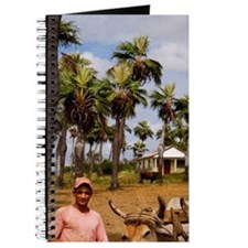 Farmer with oxen in tobacco fields in prim Journal
