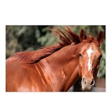 Red Horse Postcards (Package of 8)