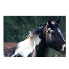 Paint Horse Postcards (Package of 8)