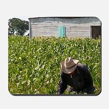 Tobacco farmer picking tobacco in field  Mousepad