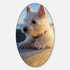 West Highland Terrier puppy on wood Decal