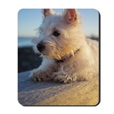 West Highland Terrier puppy on wood Mousepad