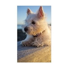 West Highland Terrier puppy on Decal