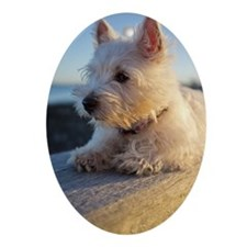 West Highland Terrier puppy on wood Oval Ornament
