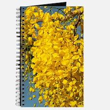Yellow Poui (Cybistax donnell-smithii), Bo Journal
