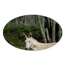 Feral Donkey or Ass (Equus Africanu Decal