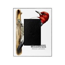 Red-Headed Woodpecker Picture Frame