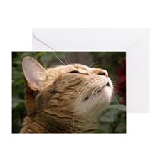 Animal Muse Cat Cards Greeting Card