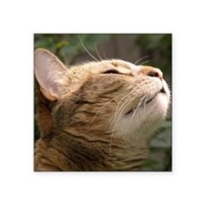 """Animal Muse Cat Cards Square Sticker 3"""" x 3"""""""