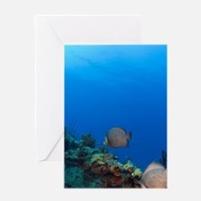 Grey Angelfish (Pomacanthus arcuatus Greeting Card