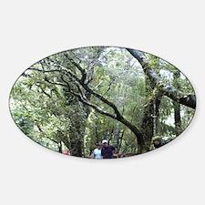 Rain forest boardwalk, Milford Soun Decal