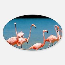Flamingos at Laguna Oviedo, Barahon Decal