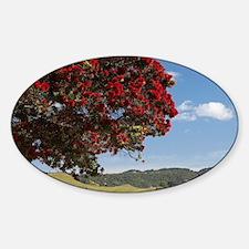 Pohutukawa Tree and Buffalo Beach,  Sticker (Oval)