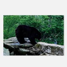 bear11 Postcards (Package of 8)