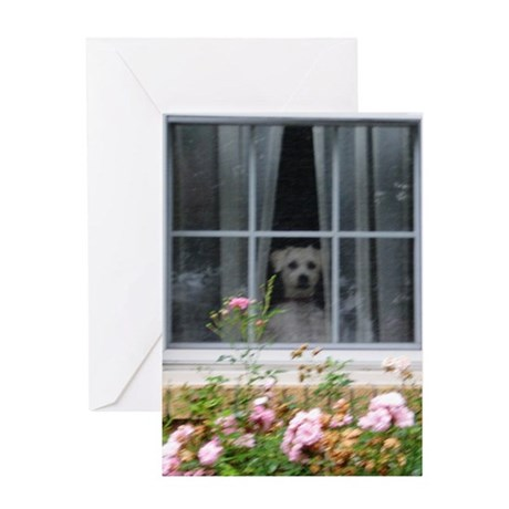 Zak in the window Greeting Card