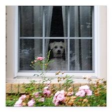 "Zak in the window Square Car Magnet 3"" x 3"""