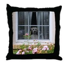 Zak in the window Throw Pillow
