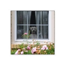 "Zak in the window Square Sticker 3"" x 3"""