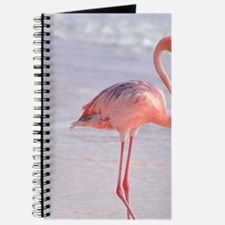 Caribbean, Aruba, Sonesta Island, Flamingo Journal
