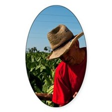 Colorful farmers harvesting tobacco Decal