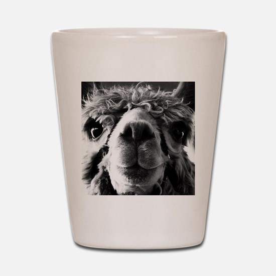 11x11 say cheese Shot Glass