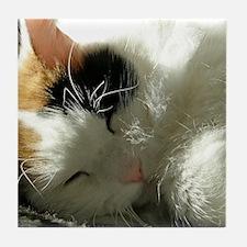 Sleeping Kitty Tile Coaster