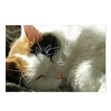 Sleeping Kitty Postcards (Package of 8)