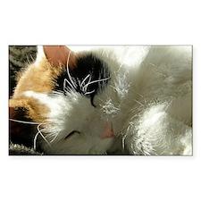 Sleeping Kitty Decal