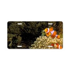 Swim over coralt Barrier Re Aluminum License Plate