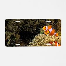 Swim over coralt Barrier Re Aluminum License Plate