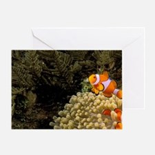 Swim over coralt Barrier Reef. Anemo Greeting Card