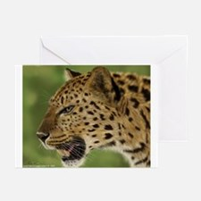 Leopard Greeting Cards (Pk of 10)