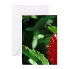 Dominica, Roseau. Torch Ginger. Greeting Card