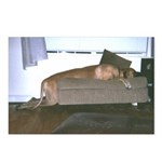 Dog tired Postcards (Package of 8)