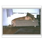 Dog tired Small Poster