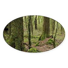 Fiordland National Parknd, Fiordlan Decal