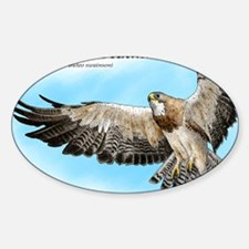 Swainsons Hawk Decal