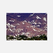 Nesting egrets, Lago Enriquillo,  Rectangle Magnet
