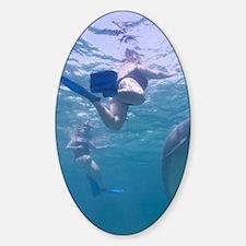 Captive Bottlenose Dolphin (Tursiop Decal