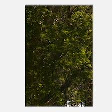 Cherry Tree Hill: Tree Li Postcards (Package of 8)