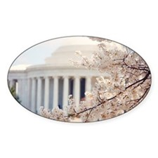 Cherry Blossoms in DC Decal