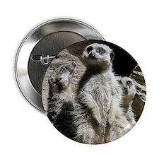 "meerkats 2.25"" Button"
