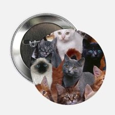 "cats 2.25"" Button"