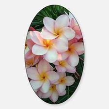 Pretty Pink Plumeria Flowers Decal