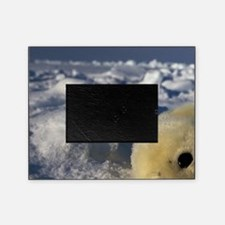 Gulf of St. Lawrence. Harp Seal (pho Picture Frame