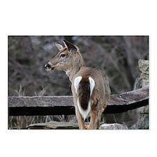 deer_shoulder_back Postcards (Package of 8)