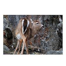 deer_shoulder_front Postcards (Package of 8)