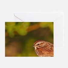 Song Sparrow (Melospiza melodia) on  Greeting Card