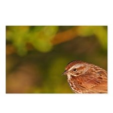 Song Sparrow (Melospiza m Postcards (Package of 8)