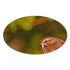 Song Sparrow (Melospiza melodia) on Decal